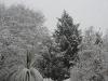 Snowfall - the garden.
